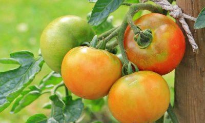 Kitchen gardening best to get healthy vegetables